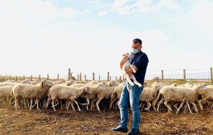 Petrosino sindaco con pecore Trapani