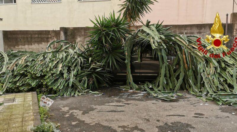 Acireale auto pianta vigili del fuoco