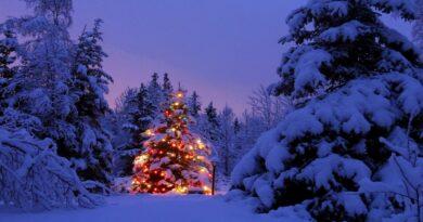 Albero Natale Sicilia