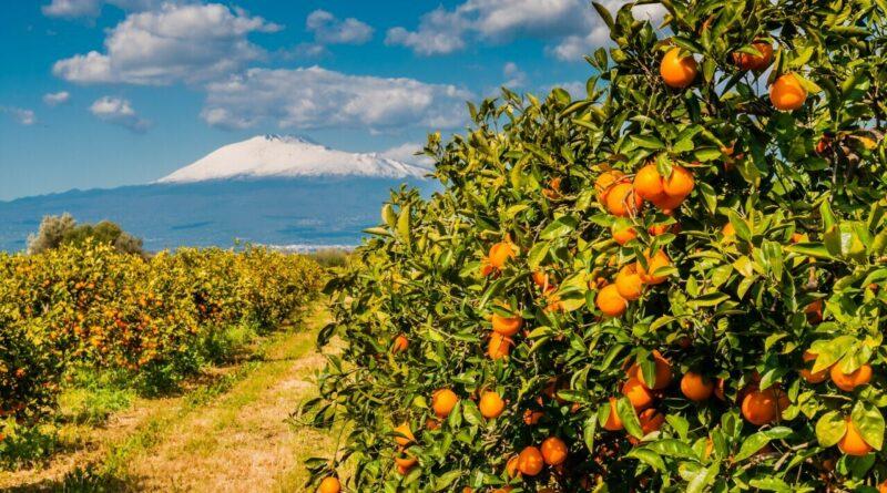 Arance Sicilia Etna Catania