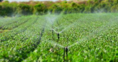 Invasi agricoltura Sicilia