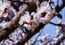 20 marzo 2021: oggi l'Equinozio segna l'inizio della Primavera astronomica