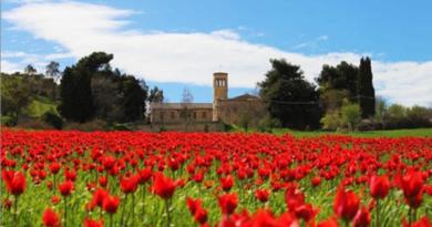 Blufi tulipani rossi