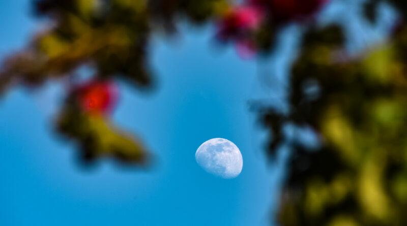 superluna fiori maggio