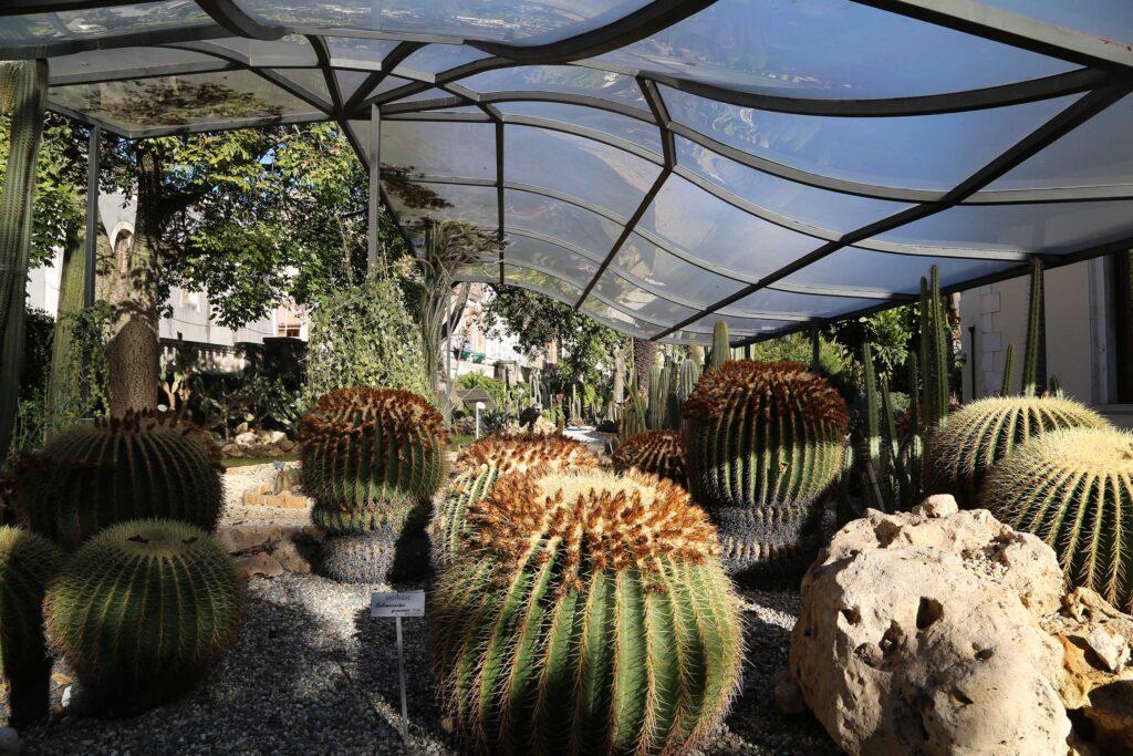 Orto botanico di Catania piante grasse
