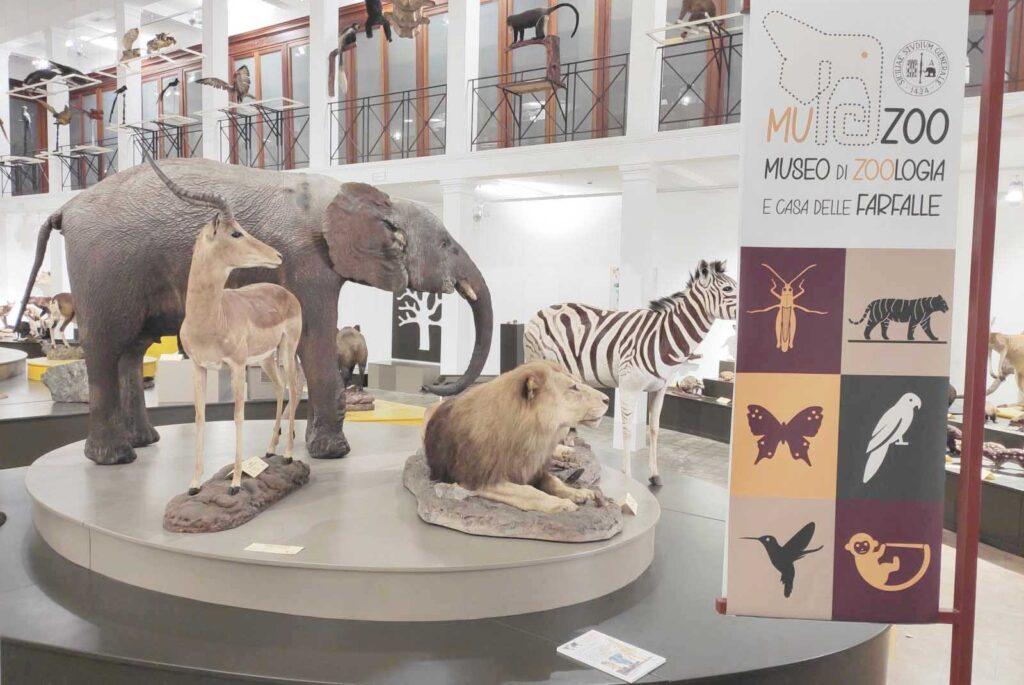 museo zoologia savana