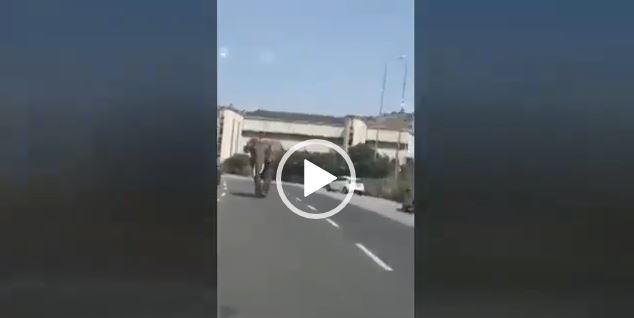 Elefante messina